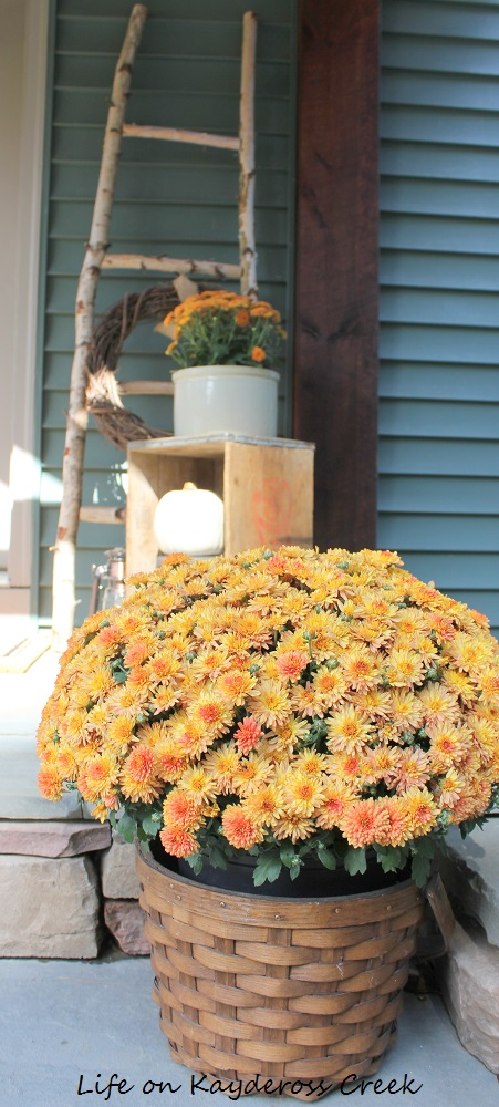 Fall Front Porch and DIY Birch Ladder - Flowers - Life on Kaydeross Creek